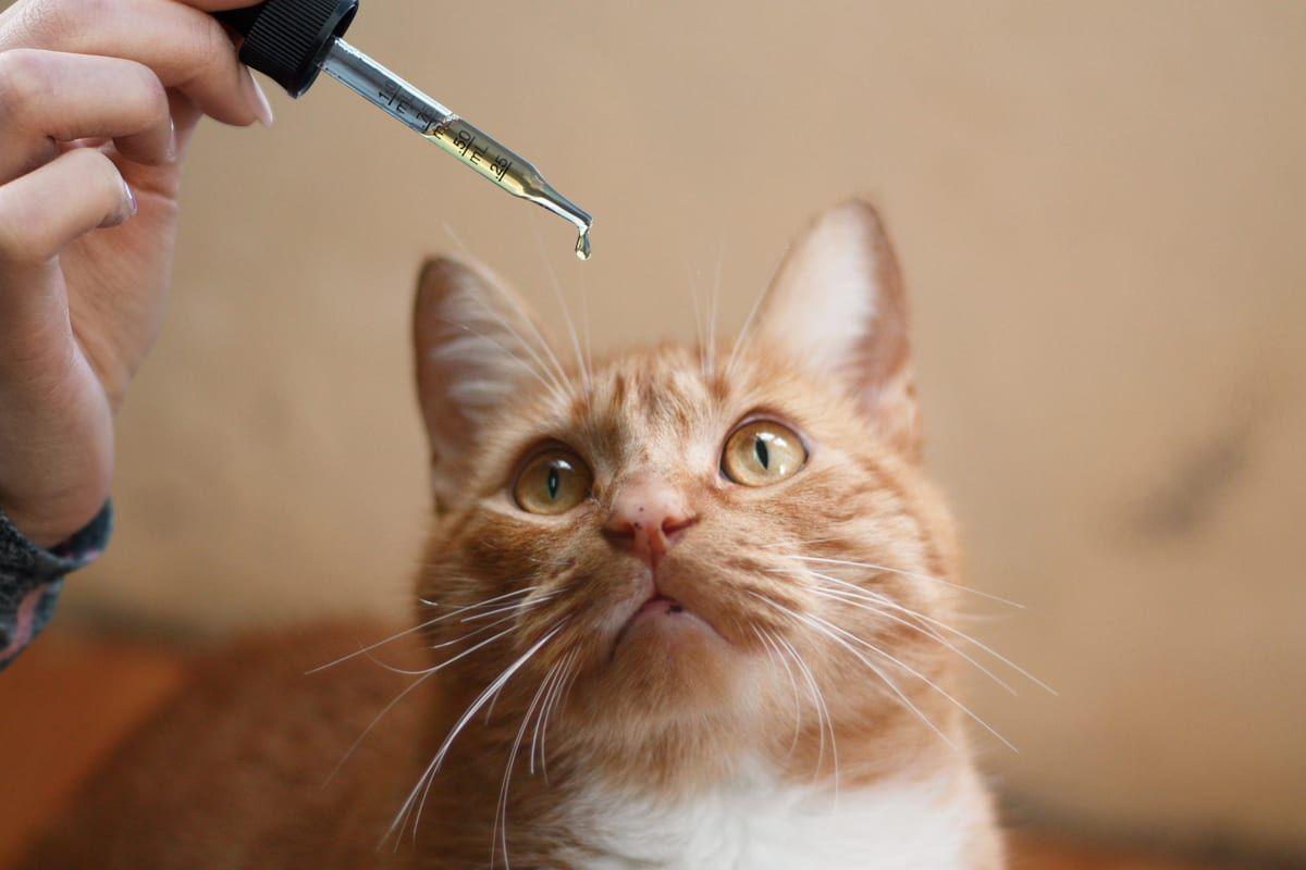 Treat Your Pet's Allergies Soon